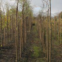 volle-grond-boomkwekerij-03