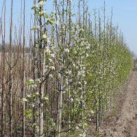 volle-grond-boomkwekerij-08