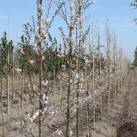 volle-grond-boomkwekerij-09