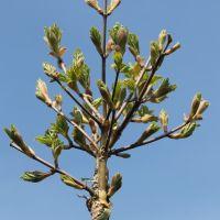 volle-grond-boomkwekerij-10